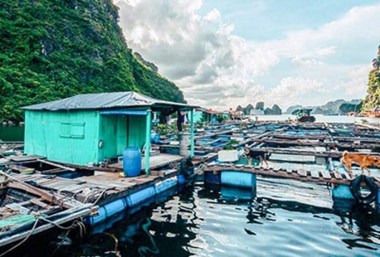làng chài ba hang vịnh hạ long